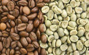 قیمت قهوه عربیکا و روبوستا | خرید قهوه عمده