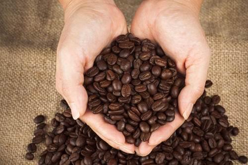 قیمت قهوه روبوستا