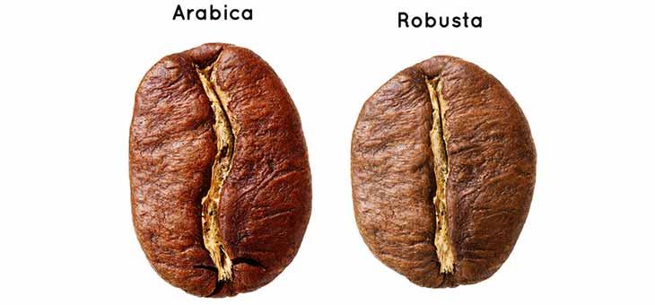 خرید قهوه روبوستا، خرید قهوه عربیکا