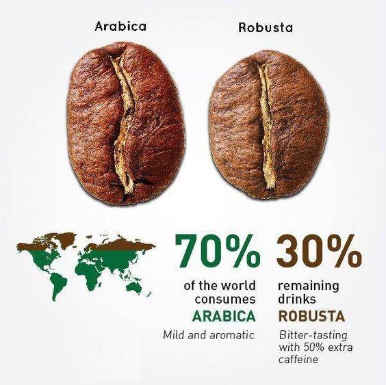 تفاوت قهوه عربیکا و قهوه ربوستا