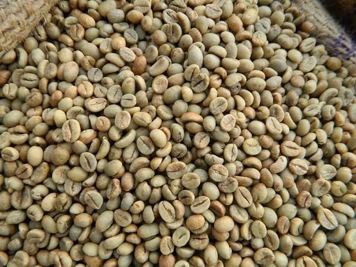 دانه سبز قهوه روبوستا ویتنام