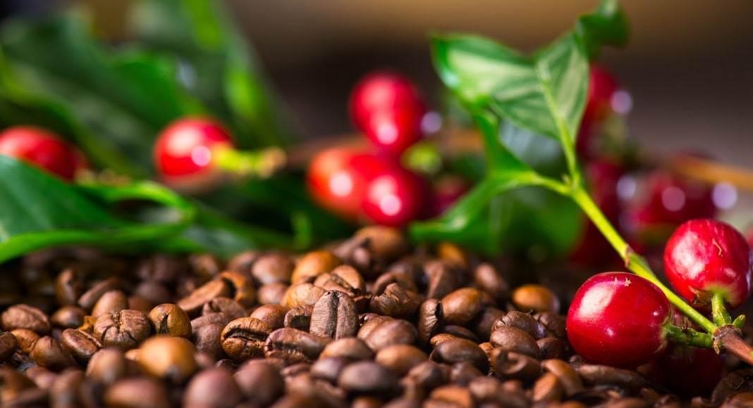 گیلاس قهوه عربیکا کلمبیا