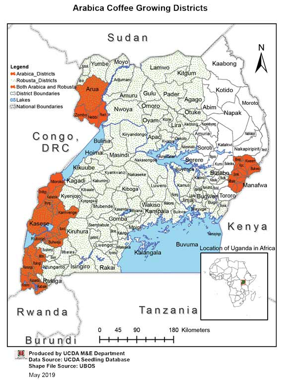 مناطق رشد قهوه عربیکا اوگاندا