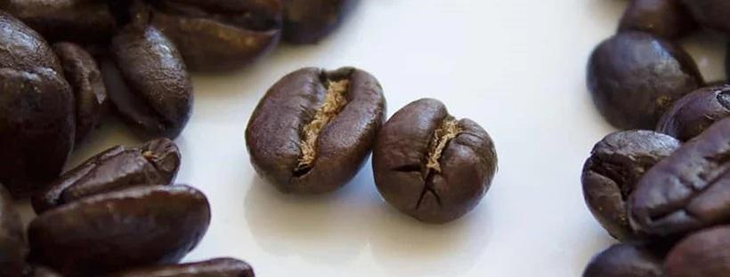 دانه قهوه عربیکا