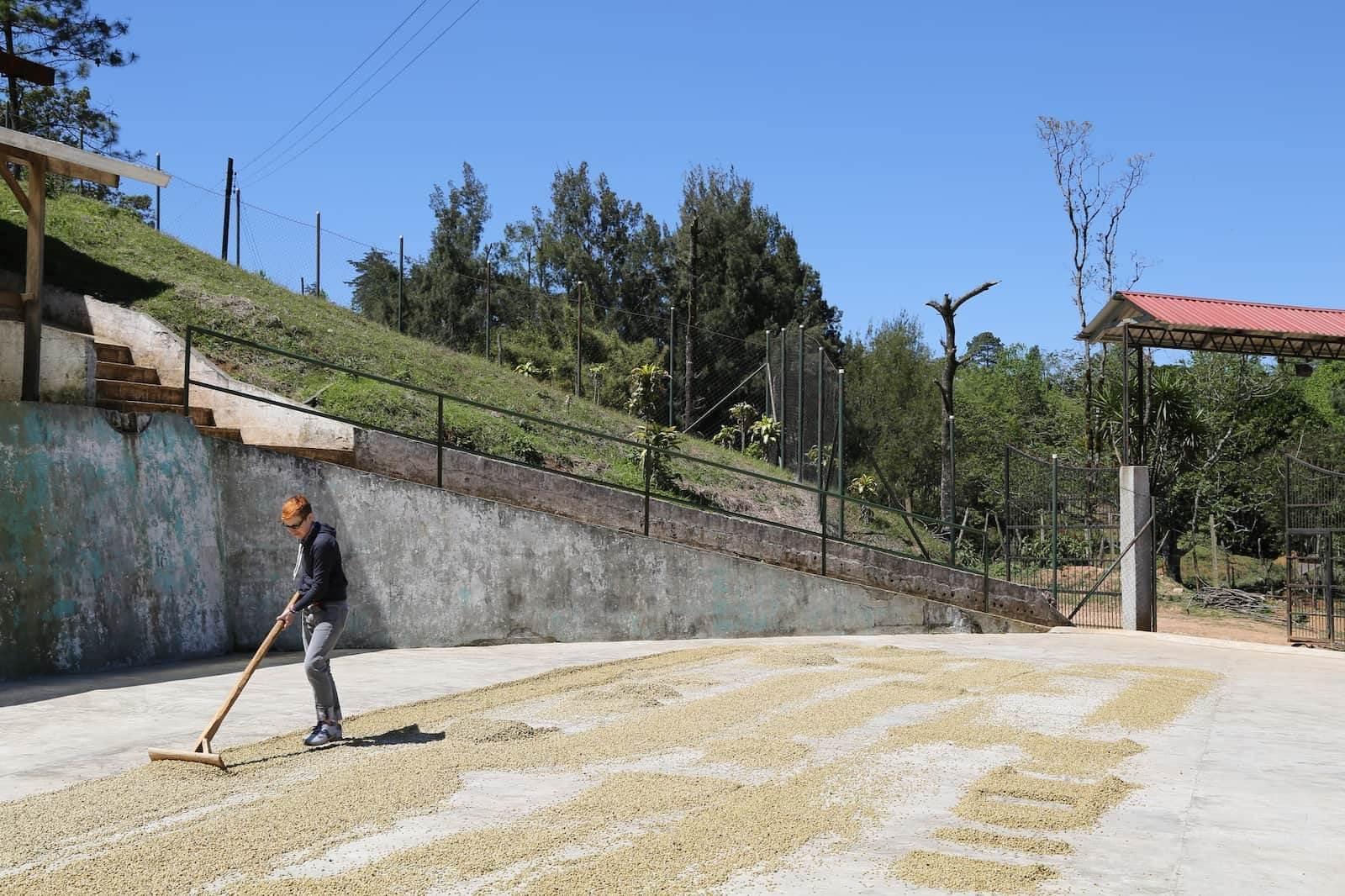 فرآوری قهوه عربیکا هندوراس