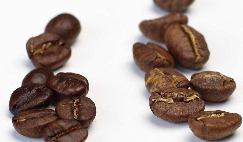 قهوه عربیکا قهوه روبوستا