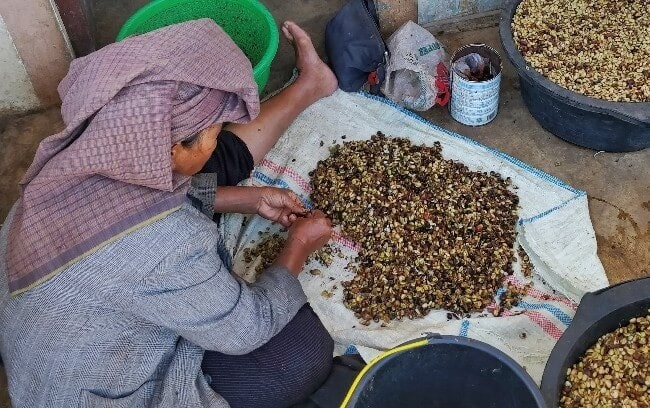 پردازش قهوه عربیکا سوماترا