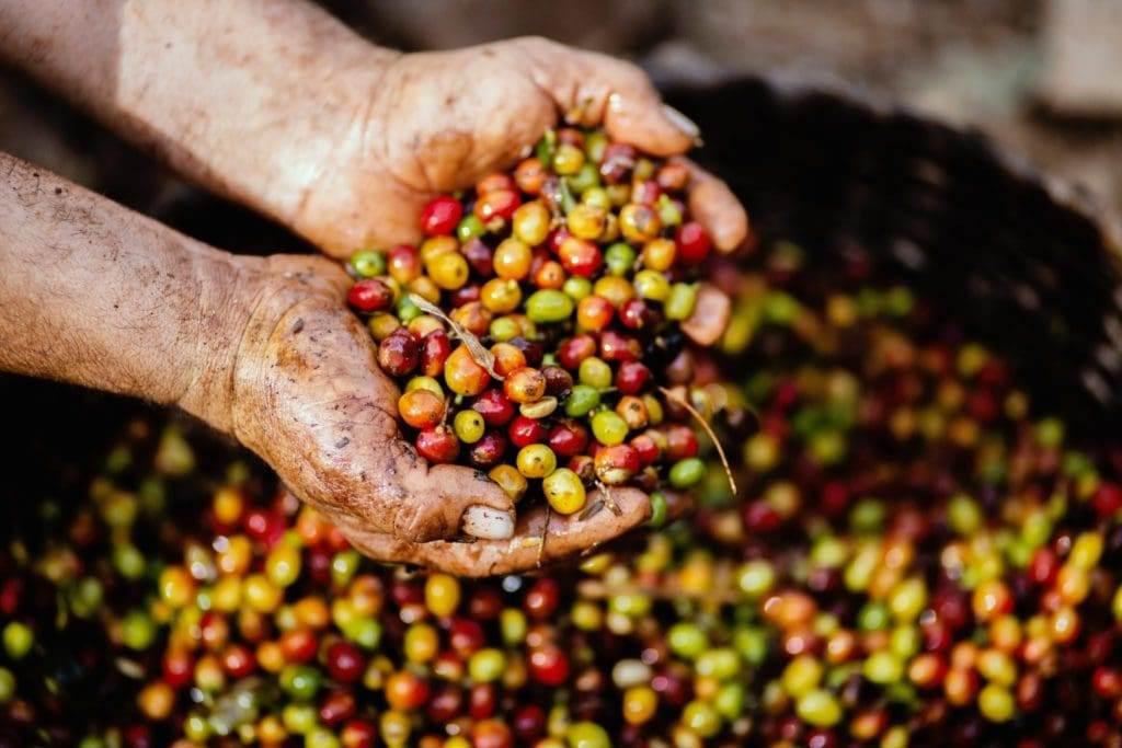 قهوه عربیکا آتیتلان گواتمالا