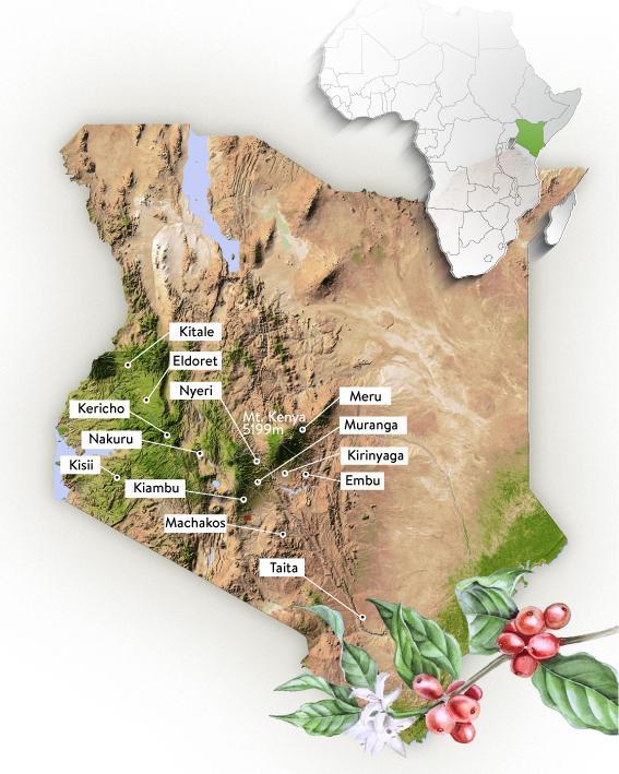 مناطق رشد قهوه عربیکا کنیا