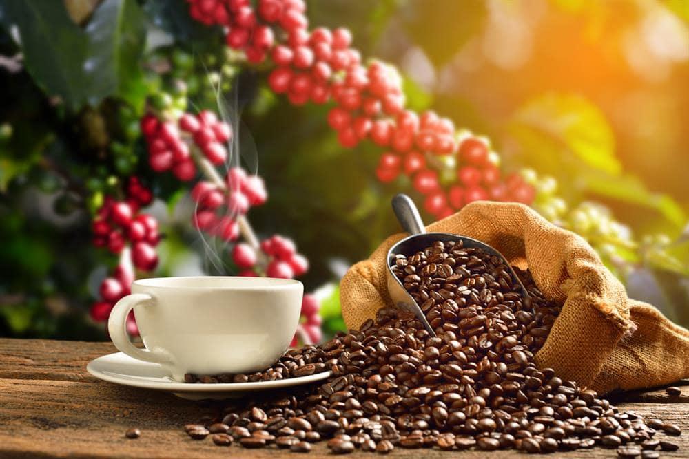 خرید قهوه مرغوب