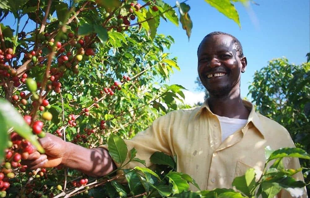 قهوه در آفریقا