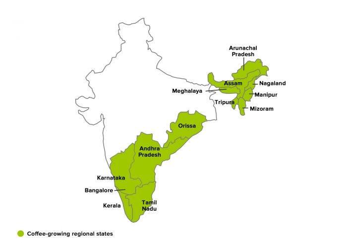 مناطق رشد قهوه عربیکا هند پلنتیشن