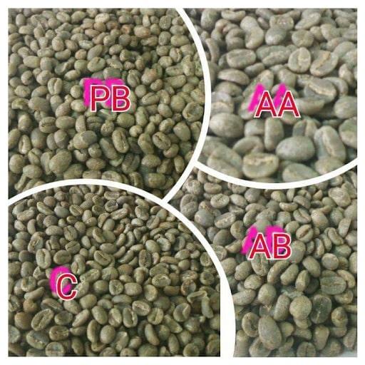 درجات مختلف قهوه عربیکا کنیا