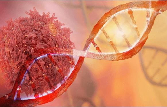 زعفران درمان سرطان