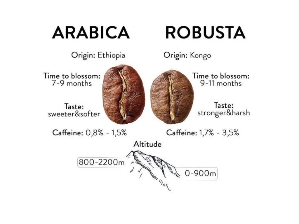 قهوه عربیکا و روبوستا
